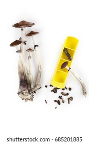 Magic mushroom microdosing, fresh psychedelic mushrooms and dry hallucinogen mushrooms in gelcaps isolated on white background with pillbox, top view. Alternative medicine.