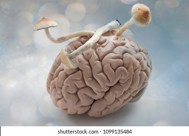 Magic mushrooms on a human brain. The mind altering effects of psilocybin on the mind. Mycology and biology concept. Plants, medicine and human psychology.