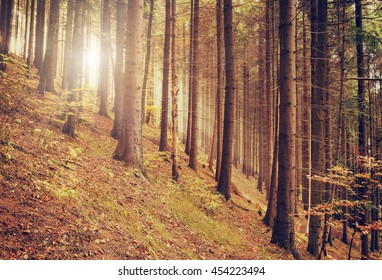 Magic pine forest with sun and beam, nature vintage hipster background - Shutterstock ID 454223494