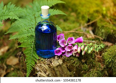 magic potion. Blue herbal tincture in a square glass bottle and lilac flowers bells on an old moss  stump in the forest. herbal natural tincture. magic potion.Homeopathy and alternative medicine