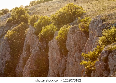 Magic spring background with midges in the Crimean mountains at sunset.