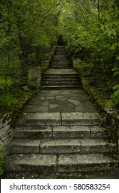 Magic stone steps going a long way up into a tunnel of freshly green dense forest.
