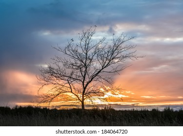 Magic sunset with a lonely tree. Emphasis in the sky and beautiful clouds.