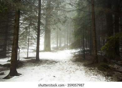 Magic trail in the forest during a foggy winter day