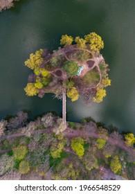 Magic Tree in Park sur l'île