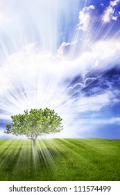 a magic tree with rays of Divine light