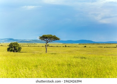 Magic of Tropical Africa. Journey to grassy savannah of the Horn of Africa. The famous Masai Mara Reserve in Kenya. The concept of ecological, exotic, extreme and photo tourism
