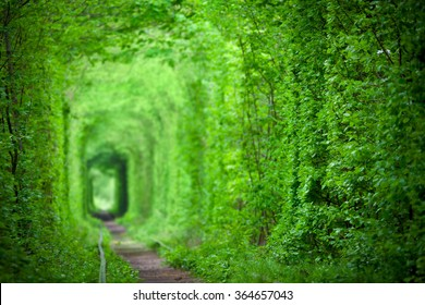 Magic Tunnel of Love, green trees and the railroad, in Ukraine. Focus on the foreground, background is defocused