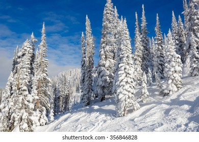 The Magic White Forest
