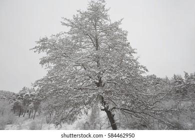Magic winter scene
