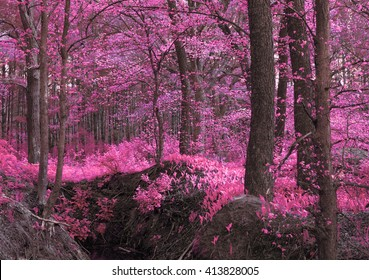 magic-wood-pinkpurple-unusual-mystical-2
