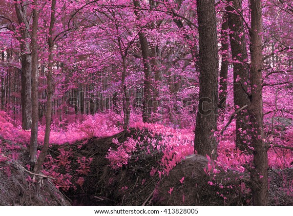 Magic wood pink-purple. Unusual mystical nature. Young foliage and grass. Photo wall-paper, card