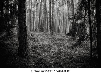 magical atmosphere forest, Natural background, black and white