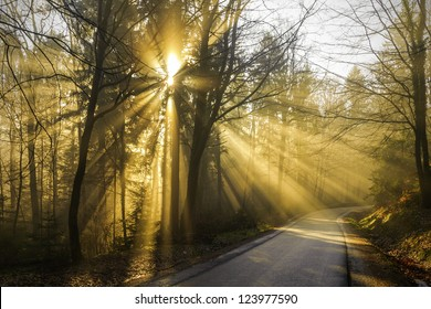 Magical beams of sunlight shine through the trees on the forest road