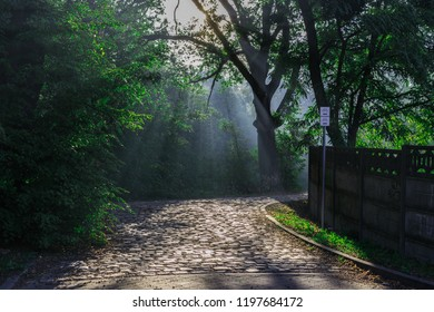Magical, beautiful view of mysterious park. Green environment, nature, trees, foliage and rays of sun. Cobbled road (bike trail) in the foreground. Shot in Wroclaw, Poland.