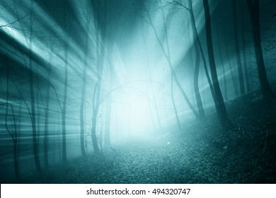 Magical blue color sun rays in the foggy forest landscape.