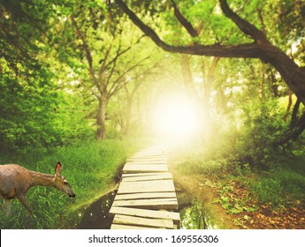a magical bridge in a green lush forest with a deer drinking from a pond