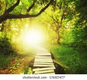 un pont magique dans une forêt verdoyante