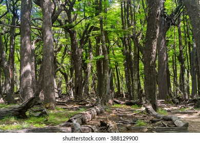 Magical bright green forest