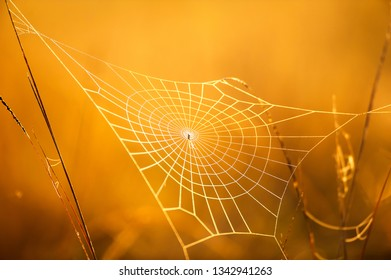 Magical cobweb with dew on winter morning, golden sunrise shines on cobweb and wild grass, bright transparent and glittering, blurred natural in the backgrounds. Selective focus.