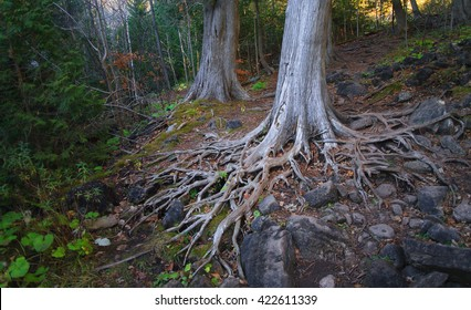 Magical Colorful Forest With Exposed Tree Roots, Rocks and Moss