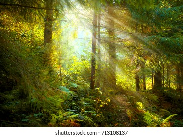 Magical Deep foggy Autumn Forest. Park. Beautiful Scene Misty Old Forest with Sun Rays, Shadows and Fog. Scenic Landscape
