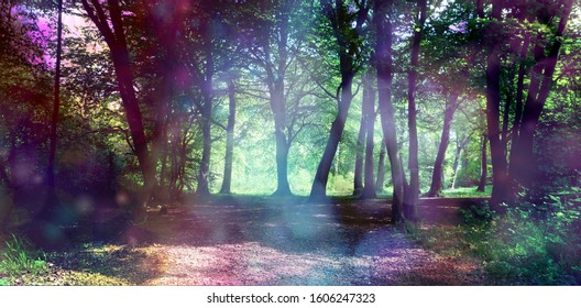 Magical fairy forest with ethereal light - surreal fantasy woodland copse with ethereal lighting on trees and undergrowth with copy space
