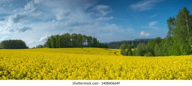 Magical fields of rape in May, cultivation - rapeseed, rapeseed oil, Poland