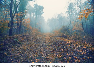 Magical foggy seasonal forest tree landscape. Lovely dreamy fairytale.
