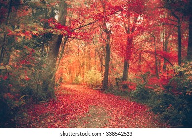 Magical forest with autumn colors and  red leaves