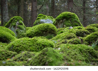 A magical forest near Stockholm, Sweden
