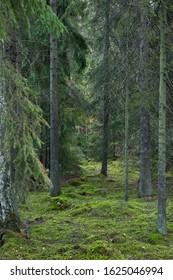 Magical forest near Stockholm, Sweden