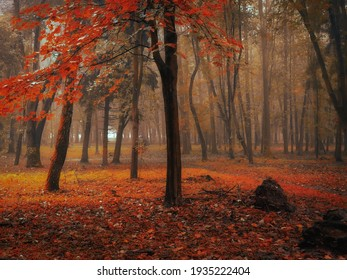Magical forest in orange tones. Mystical autumn forest in the morning fog. Beautiful background.
