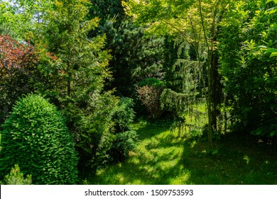 Magical garden with evergreens combined with deciduous. Thuja western, pine, juniper in combination with Japanese maple and barberry with purple leaves. Selective focus. Place for rest and relaxation.