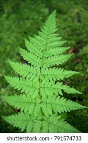 Magical grass a fern