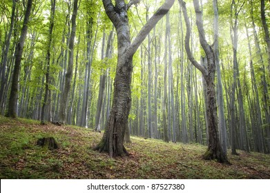 magical green forest