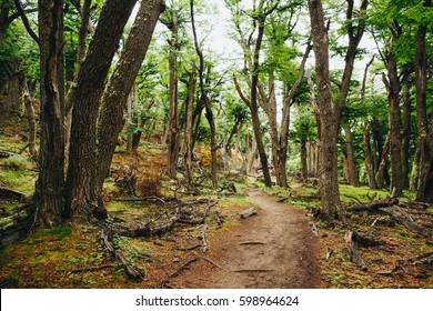 Magical Hiking Trail in the forest at Patagonia