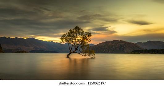 """The Magical Lake Wanaka Tree - """"That Wanaka Tree"""""""