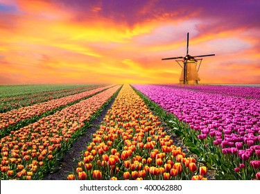 A magical landscape with sunrise over tulip field in the Netherlands (relaxation, meditation, stress management - concept)