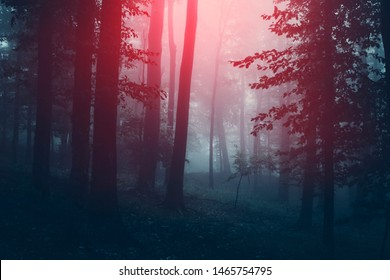 magical light in dark scary forest at night