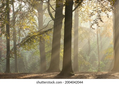 Magical light in the Dutch woodlands