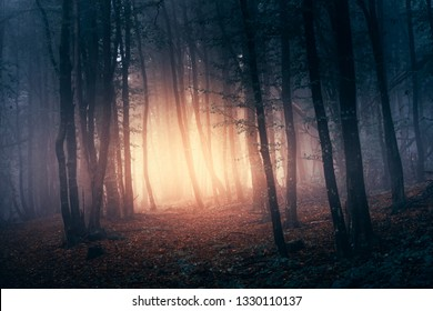 magical light in forest at sunset, trees in fog in mysterious woods scenery