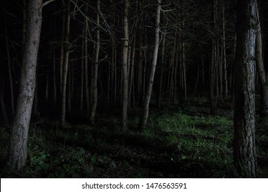 magical lights sparkling in mysterious forest at night. Pine forest with strange light. Long exposure shot