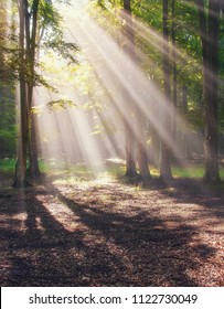 Magical, mystical forest with rays of light shining through