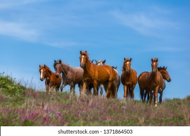 Magical natural landscape. Magnetic view of a red herd of horses. Horses in the sky. Sunny day. Blue sky. Beauty of nature concept background. Free grazing. Wild horses. Breeding. Animals.