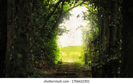 Magical pathway to a secret garden in the amazon