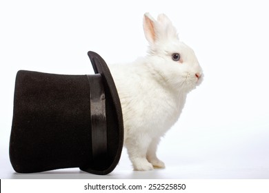 Magical rabbit. Side view image of a cute white bunny looking out from the magicians black hat isolated on white background