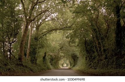 Magical road between a forest in Ireland, United Kingdom.