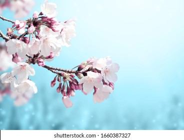 Magical scene with sakura flowers and magic sparks. Beautiful nature spring background. Photo toned in light blue color. Copy space for text