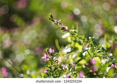 Magical sunkissed tiny purple flowers